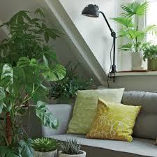 zimmerpflanzen im schlafzimmer sinnvoll oder ungesund