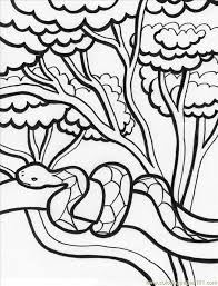 Rainforest Reptiles Coloring Pages Snake To Print