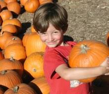 Best Pumpkin Patch In San Bernardino County by 15 Best Campgrounds For Tent Camping With Kids Near La