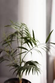 hausgartenpflanzen kümmere dich um grüne pflanzen große