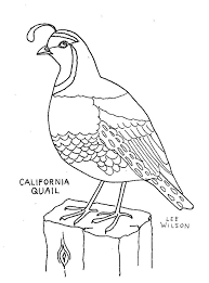 Free Quail Coloring Page