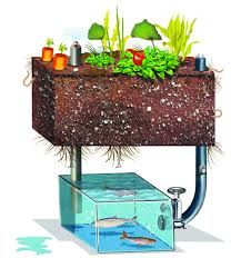 Build An Aquaponic Garden With Arduino — Gardening | Arduino ... Backyard Aquaponic Gardening System Benefits Of Backyard Greenhouse Aquaponics And Yard Design For Village Systems Aquaponics Twotiered Back Gardening Fish Farming System Food Growing Freestylefarm Pond Outdoor Fniture Design Ideas Diy Pond Images On Wonderful Endless Reviews Testimonial Collage Pics Commercial Farm Most Likely The Effective Sharingame How To