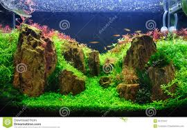 A Planted Aquarium With Rocks Stock Image - Image: 35727947 Out Of Ideas How To Draw Inspiration From Others Aquascapes Aquascaping Aquarium The Art The Planted Plant Stock Photo 65827924 Shutterstock Continuity Aquascape Video Gallery By James Findley Green With River Rocks Aqua Rebell Qualifyings For 2015 Maintenance And Care Guide Outstanding Saltwater Designs 2012 Part 1 Youtube Dennerle Workshop Fish