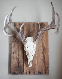 Moose Shed Antler Forums by Whitened Skull With Weathered Wood Wall Plaque This Wall Plaque