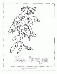 Free Seahorse Coloring Page Collection Of Pictures To Color