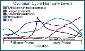 lh blood test normal range luteinizing hormone lh surge and level