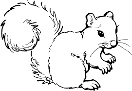 Squirrel black and white squirrel clip art black and white free clipart