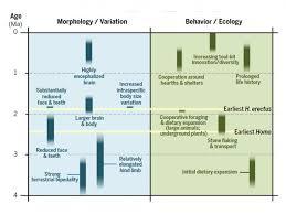 revise timeline of human origins