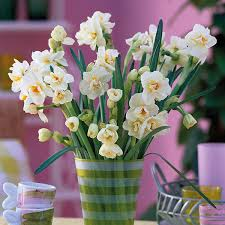 narcissus bridal crown bulbs from mr fothergill s seeds