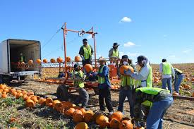 Pumpkin Patch Maryland by A Halloween Tradition Navajo Pumpkins For Nonprofits Indian