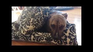 jax bones vs play lifestyle dog beds youtube