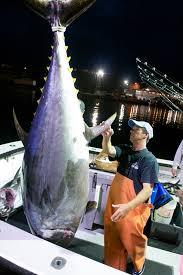 Hard Merchandise Tuna Boat Sinks by Wicked Tuna Splashes Back To Tv Star Gloucester Captains Speak