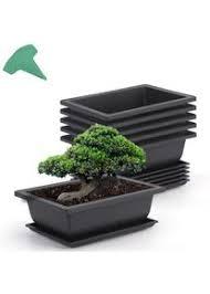 growneer bonsai trainingstöpfe mit 15 pflanzenetiketten