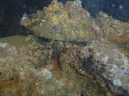 Decorator Crabs Reef Safe by Tank Journal Sequoia Reef Aquarium