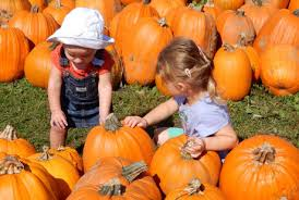 Pumpkin Patch Caledonia Il For Sale by Welcome