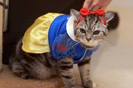 costume for cat cat costume cat costumes festival collections
