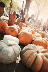 Big Orange Pumpkin Patch Celina Texas by Housing