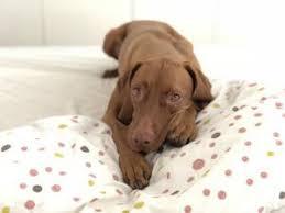 hund im schlafzimmer darf ein hund mit ins bett markt de