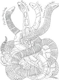 Snakes Coloring Pages Page Snake Of