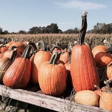 Iowa Pumpkin Patches 2015 by Sherman U0027s Pumpkin Farm And Corn Maze Home Facebook