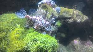 aquarium la rochelle picture of aquarium la rochelle la