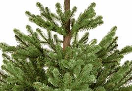 Silvertip Fir Christmas Tree Artificial by 3ft Imperial Spruce Potted Feel Real Artificial Christmas Tree
