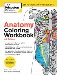 Anatomy Coloring Workbook 4th Edition By Princeton Review And Edward Alcamo