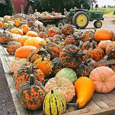 Celina Pumpkin Patch Directions by Lincoln Ridge Farms In Convoy Ohio Is Home To Great Fall Fun