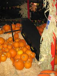Best Pumpkin Patch In Santa Clarita by October 2008 Iamnotastalker U0027s Weblog Page 3