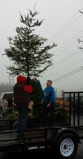 Seattle Christmas Tree Disposal by Christmas Tree Wreath Recycling U2013 Recycle Even More