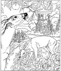 Free Printable Coloring Nature Pages 47 For Online With