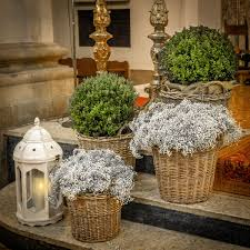 Boj Paniculata Y Velas Decoración Ceremonia Ramos Flores