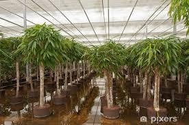 fototapete verschiedene zimmerpflanzen in einer baumschule hydrokultur
