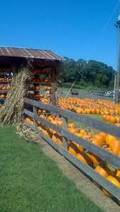 Closest Pumpkin Patch To Marietta Ga by Cagles Family Farm In Canton Ga Pumpkin Patch Bonfire Hayrides