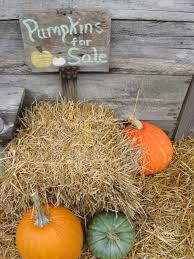 Old Auburn Pumpkin Patch by A Pumpkin Patch Party Southern Hospitality