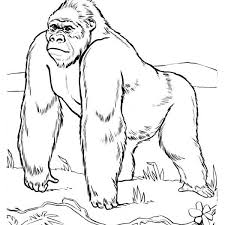 Coloring Site Gorilla Pages