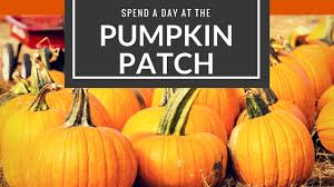 Pumpkin Patch Fort Worth Tx by Blog Easy Clean Maids Home And Apartment Cleaning In Fort Worth