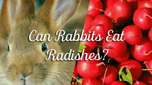 Can Bunny Rabbits Eat Pumpkin Seeds by Pet Consider Online Pet Authority Part 14