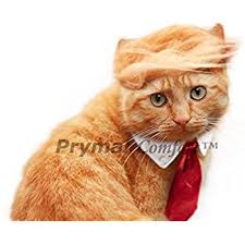 costume for cat cat costume and tie for festival