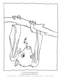 Bat Coloring Pages Fruit Pictures From Our Collection Of Wildlife Here Free To Print Color