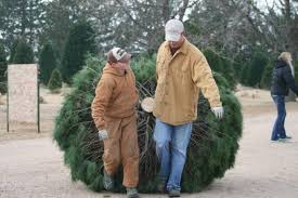 Family Celebrates 55 Years In The Christmas Tree Business