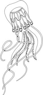 Click To See Printable Version Of Box Jellyfish Coloring Page