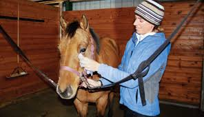 Horse Hair Shedding Blade by A Grooming Guide To Cleaning Your Horse Expert Advice On Horse
