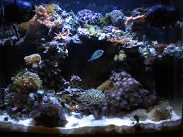 Live Rock Scaping - Beginners Discussion - Nano-Reef.com Community Aquarium Aquascaping Rocks Aquascape Designs Ideas Project Reef Rock 21 Dry Walt Smith Bulk Supply Review Real Generation 4 Digitalreefs News Info How To Live Purple Live Rock Youtube Updated Clear Pics Newbies Attempt At Aquascaping So Far 3reef Design Aquafishvietcom Bring Back The Wall News Builders Keeping Austin Club Walls For A Tank Callorecom River Suggestion Planted Forum