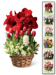 monthly flower delivery 6 months of blooms gardener s supply