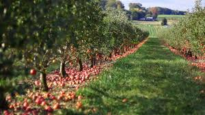 Michigan Pumpkin Patch Apple Orchard by Apple Orchards Near Nyc Apple Picking Without A Car Offmetro Ny