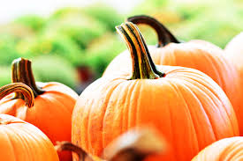 Pumpkin Patch Northwest Arkansas by Here U0027s What You Need To Know Before You Go Pumpkin Picking This