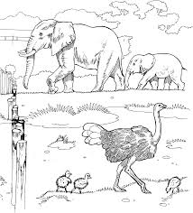 African Animals Coloring Pages Printable Free