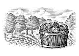 Steven Noble Illustrations Apple Orchard