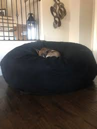 My Shibe-Bull (shiba Inu Pitbull Mix) Laying On A Bean Bag ... Kids Man U Bean Bag Bull Leathers Alkapuri Bag Dealers In Vadodara Justdial Berlin Bean Chair Konfo Living Blog Why Cool Australian Office Break Out Areas Sitting Bull The Original Sitting Bull Happy Zoo Beanbag Sitting Carl Contemporary Fabric Childs Blue Mini Tube Outdoor Gaming Setup Update I Bought A Giant David Cottingham On Twitter Its Hard Life Being Cto